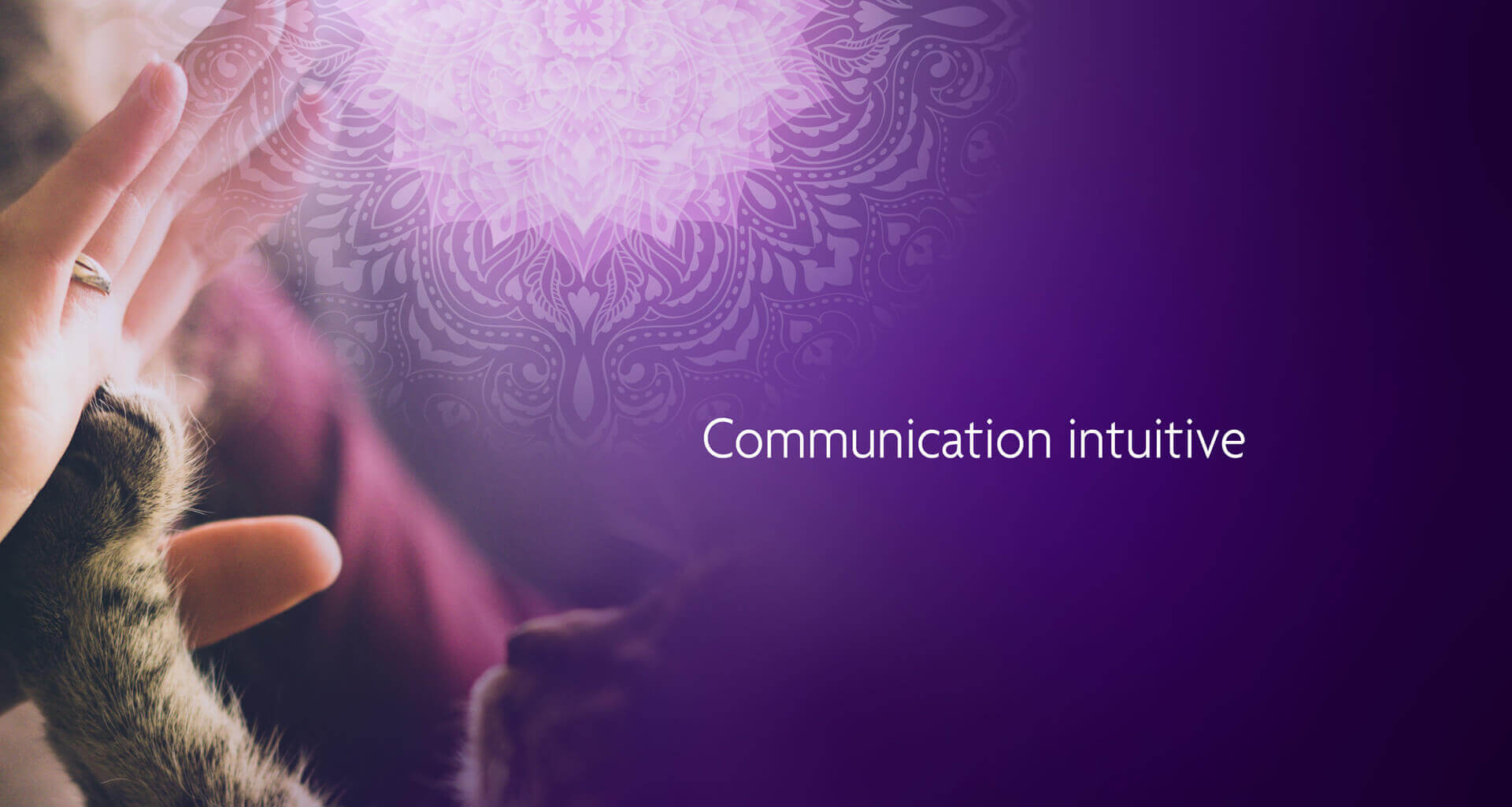 La communication intuitive - Aurélie Baumlin en Alsace